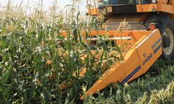 Oxbo 3000 Series Corn Harvesting