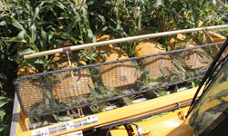 Oxbo 3000 Series Sweet Corn Head