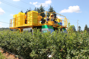 Oxbo 7440 Berry Harvester