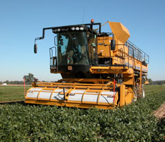 Oxbo 6165 Pea and Broad Bean Harvester