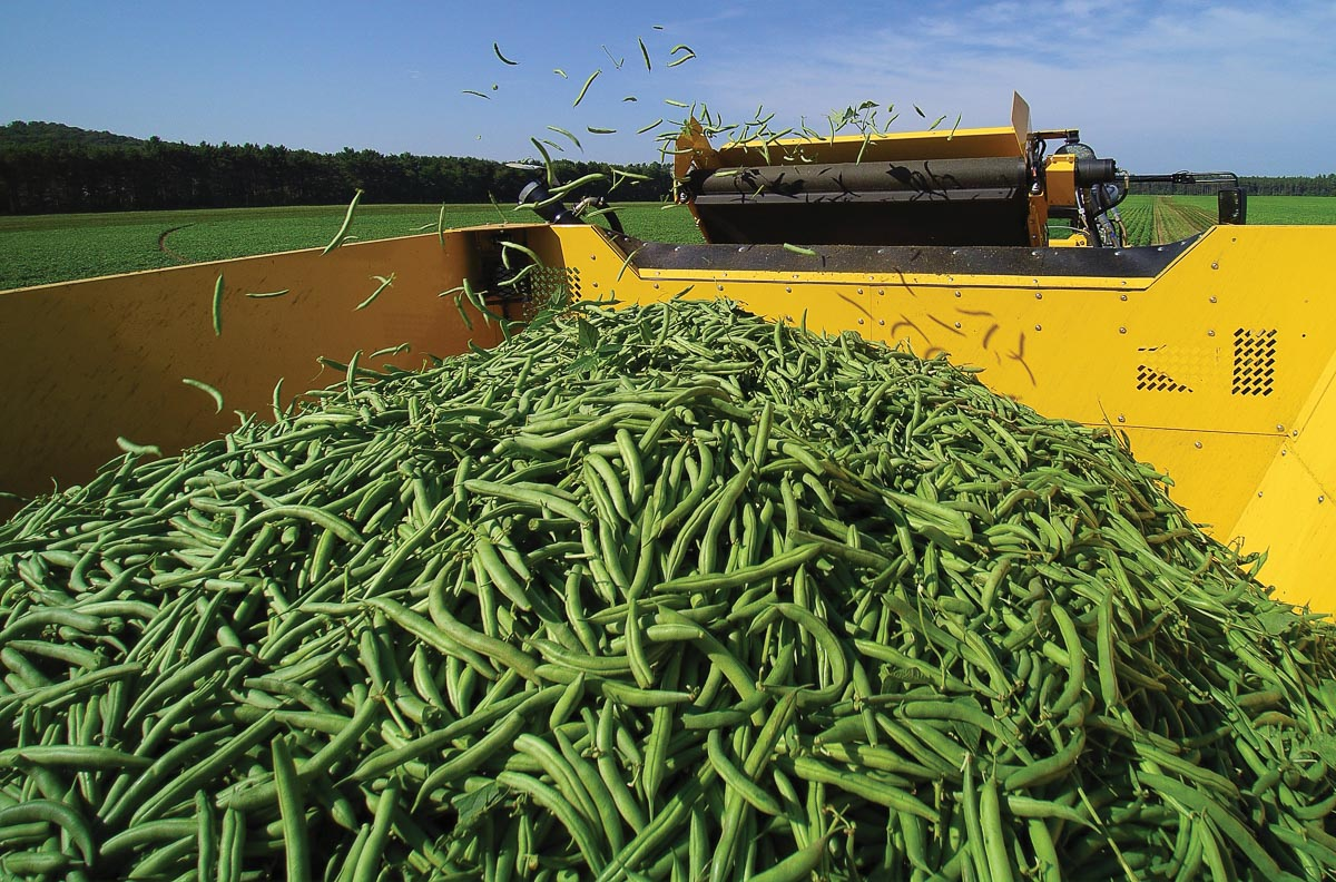 Oxbo 2475 Green Bean Harvester