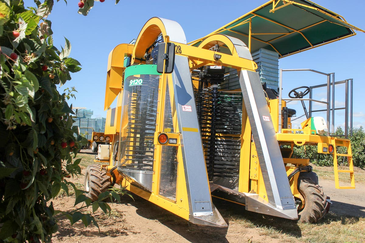 1 57m In Feet And Inches Oxbo 9120 Raspberry Harvester
