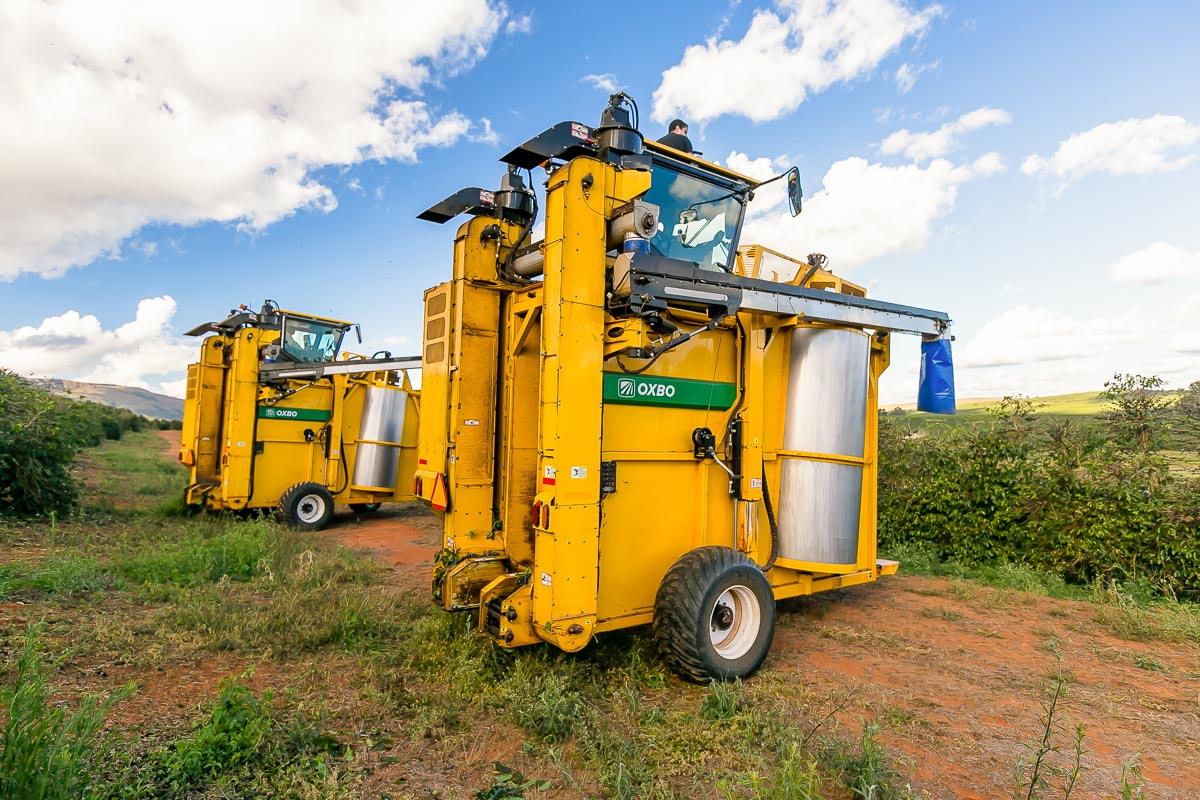 Oxbo 9240 Coffee Harvester Features and Benefits
