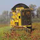 Oxbo 2430 Green or Dry Chile Pepper harvester