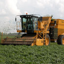 Oxbo 2485 Sugar Snap Pea Harvester