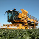Oxbo 6165 lima, broad, garbanzo and edamame bean harvester