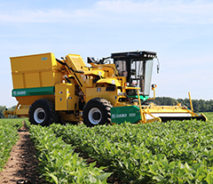 Oxbo 2430 Fresh Market Green Bean Harvester