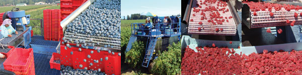 Raspberry harvesters and Blueberry harvesters by Oxbo International Corp